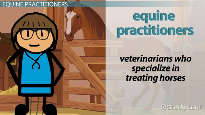 How to Become an Equine Practitioner: Step-by-Step Career Guide