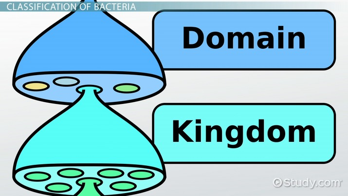 Kingdom Bacteria Definition Examples Video Lesson Transcript