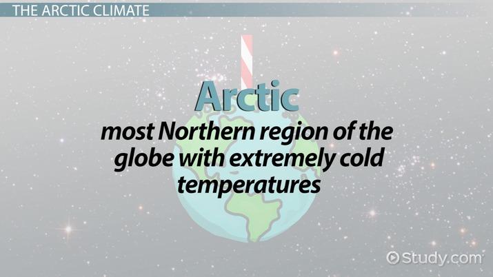 Arctic Food Chain - Video & Lesson Transcript   Study com
