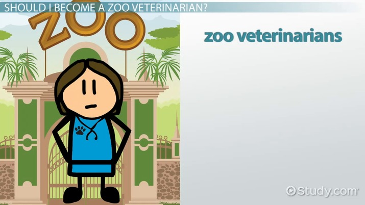 Becoming a Zoo Veterinarian: Step-by-Step Career Guide