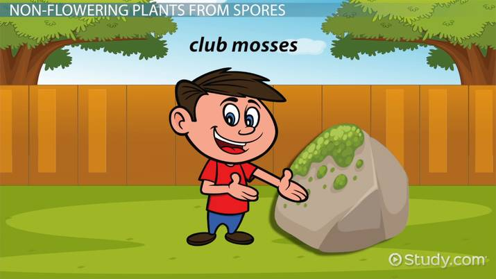 Nonflowering Plants Lesson for Kids: Names & Examples - Video