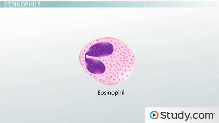 Functions of Red Blood Cells, White Blood Cells & Platelets - Video