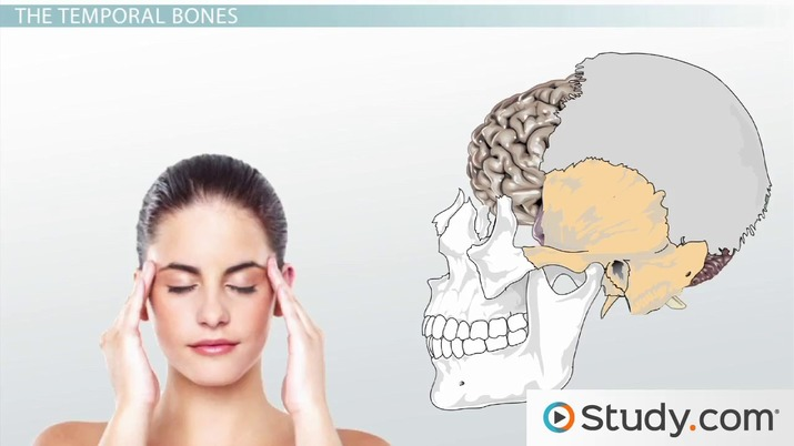 Major Bones of the Skull: Names and Location - Video & Lesson