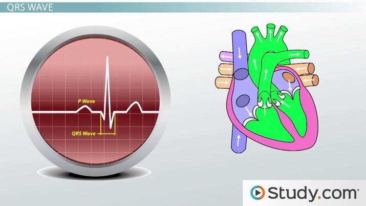 Electrocardiogram ECG Definition Wave Types
