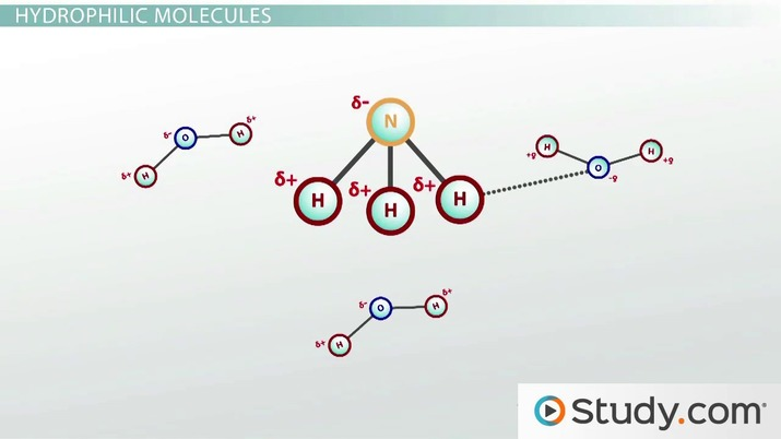 Solutions Solutes And Solvents Video Lesson Transcript