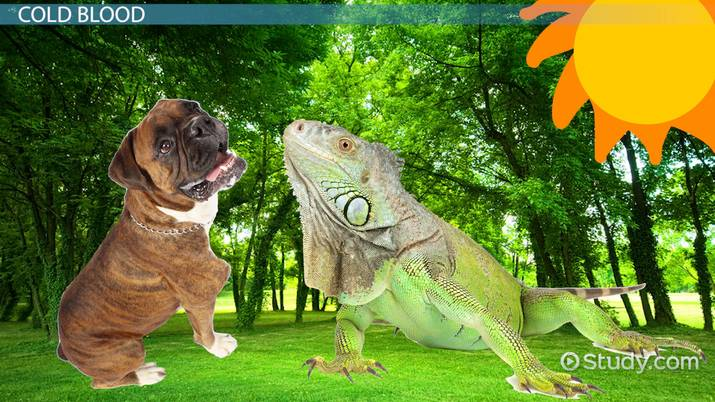 What Animals Are Cold Blooded Video Lesson Transcript Study