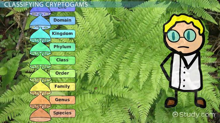 Cryptogams: Classification & Characteristics - Video