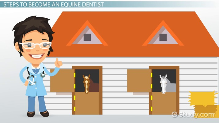 How to Become an Equine Dentist