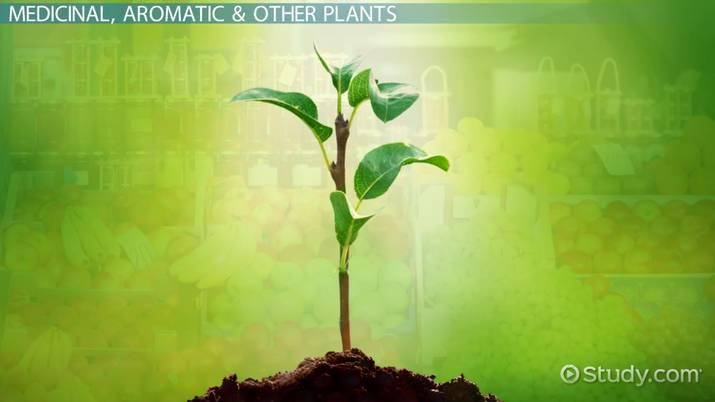 Horticulture: Definition & Branches - Video & Lesson Transcript