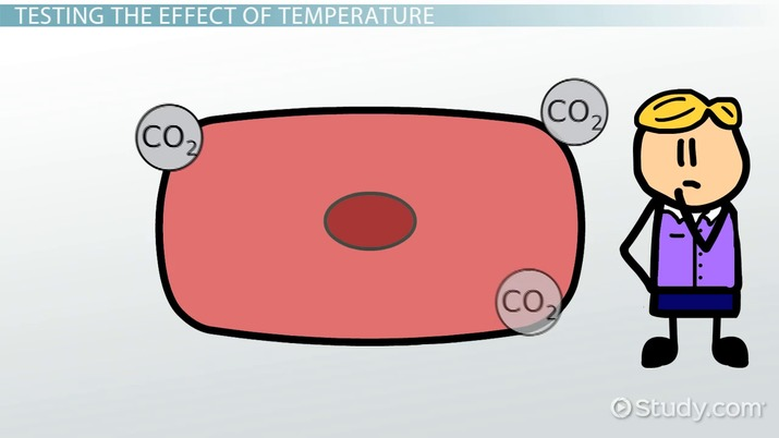 Effect of Temperature on Cellular Respiration - Video