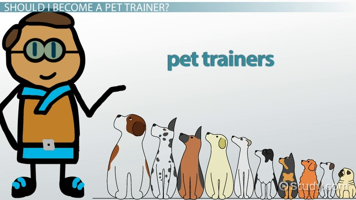 How to Become a Pet Trainer: Education and Career Roadmap