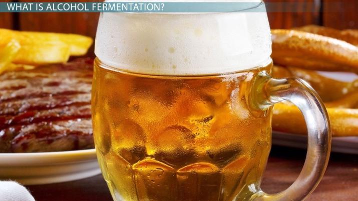Alcohol Fermentation: Definition, Equation & Process - Video