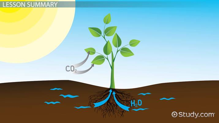 what is given off during photosynthesis