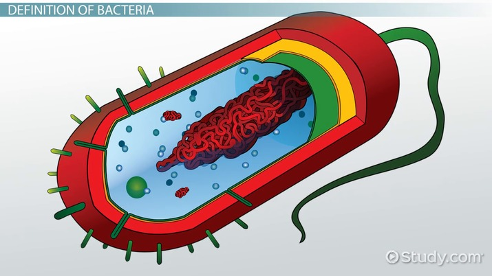 Do Bacteria Cells Have Organelles?