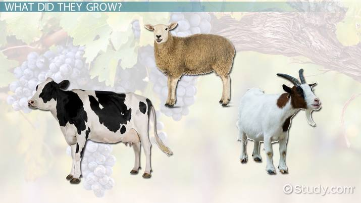Farming In Ancient Rome Lesson For Kids Video Lesson
