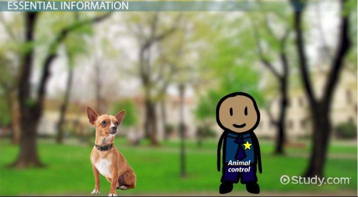 Animal Control Officer: Job Description and Career Requirements