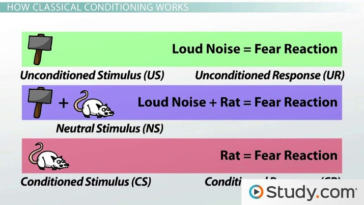 Classical Conditioning In Psychology Definition Principles