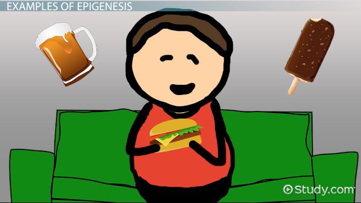 Epigenesis: Definition & Concept - Video & Lesson Transcript