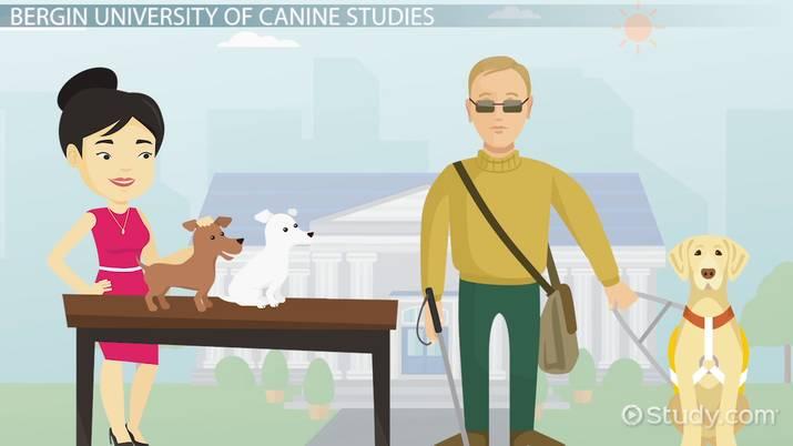 Top Schools For Animal Training
