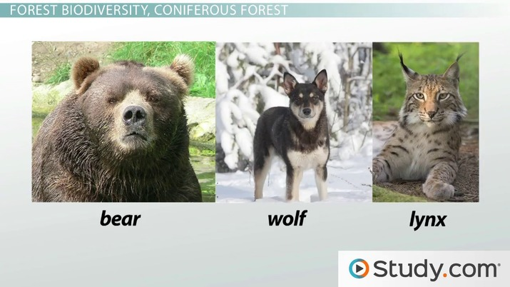 Biological Diversity and the Forest: Ecosystems of the