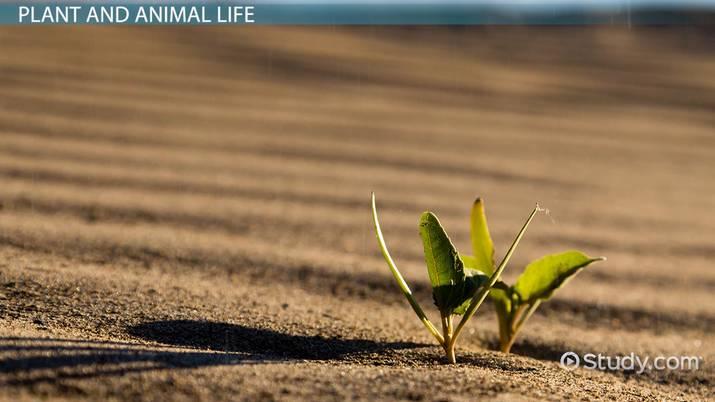 Desert Ecosystem Lesson for Kids - Video & Lesson Transcript