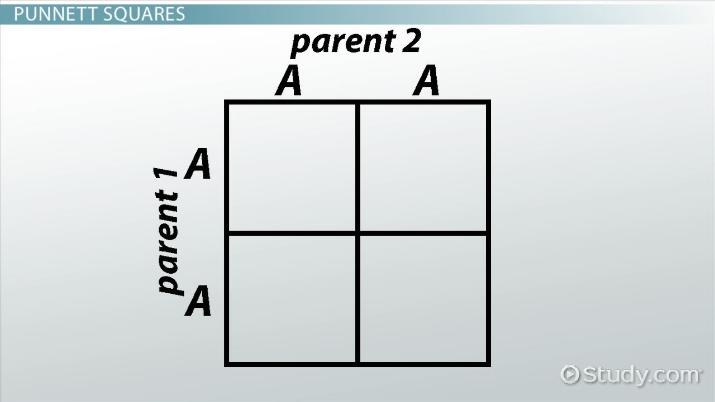 Genetics And Punnett Squares Getting Traits From Parents Video