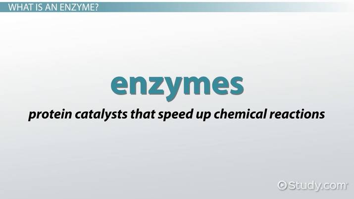 What Is The Mechanism Of Enzyme Activity Video Lesson