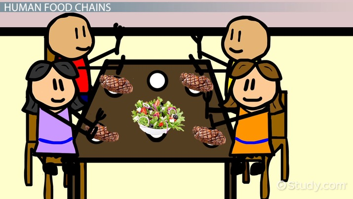 Human Food Chain Definition Examples Video Lesson Transcript