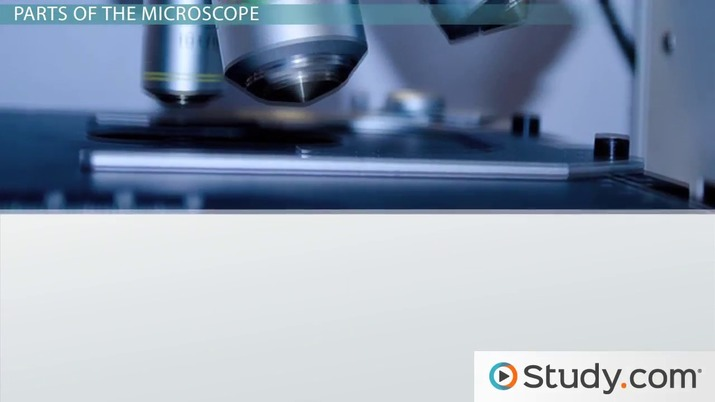 Introduction to the Compound Microscope: Parts & Uses