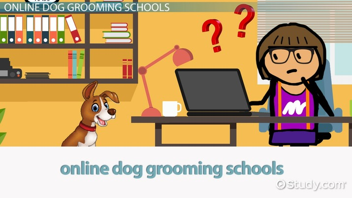 Online Dog Grooming Schools: How to Choose