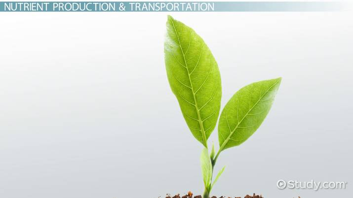 What is Plant Physiology? - Definition & Experiments - Video