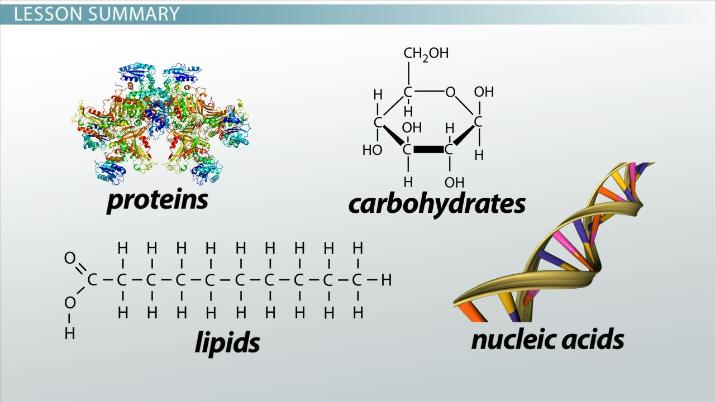 Molecules In Living Organisms Number Size Video