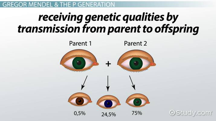 p generation  definition  u0026 offspring
