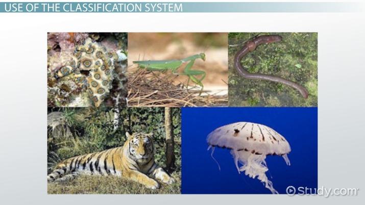 Genus: Definition & Classification - Video & Lesson