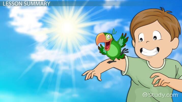 Parrot Adaptations: Lesson for Kids - Video & Lesson Transcript