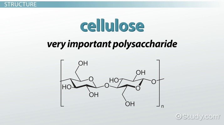 Cellulose In Plants Function Structure Video Lesson