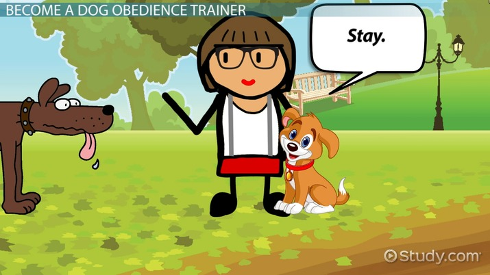 How To Become A Dog Obedience Trainer Step By Step Career Guide