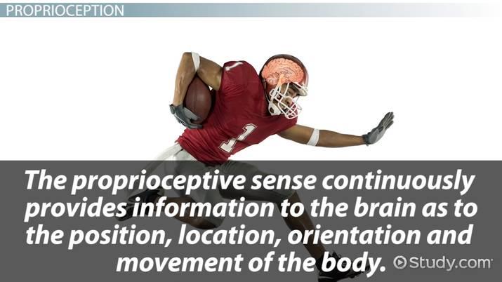 Proprioception: Definition & Exercises - Video & Lesson