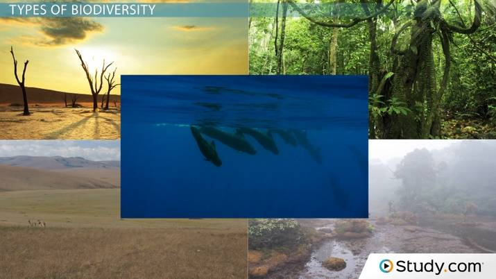 What is Biodiversity? - Definition and Relation to Ecosystem