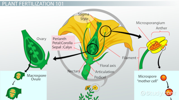 Sexual reproduction in plants igcse center