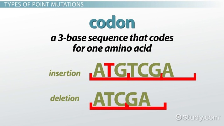 Point Mutations In Dna Types Diseases Examples Video Lesson