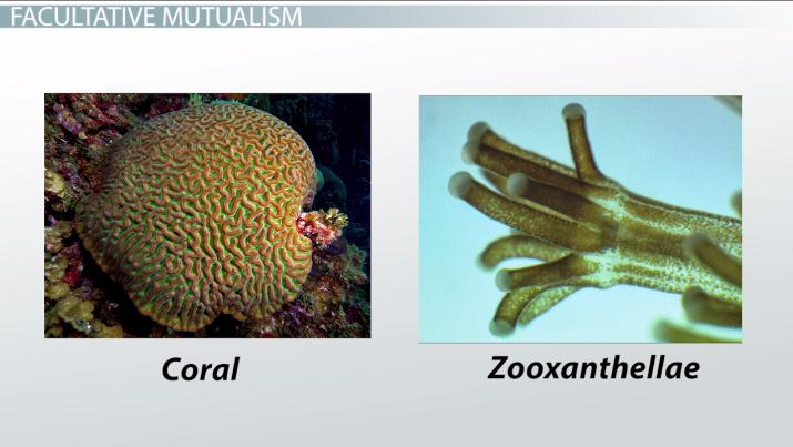 Community ecology community ecology ppt video online download.