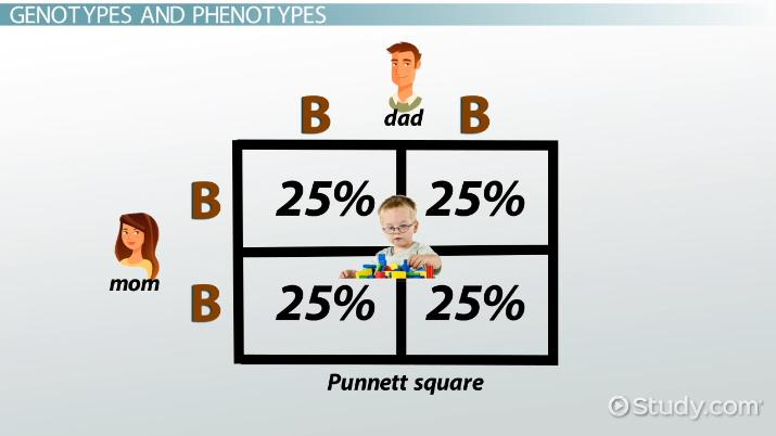 Punnett Square Definition Example Video Lesson Transcript
