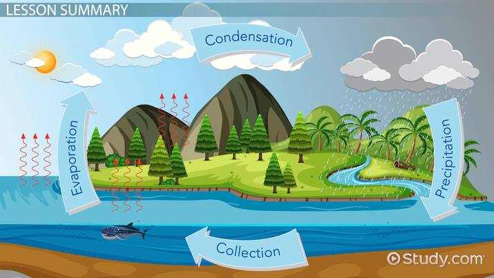 Illustration of the water cycle, showing the process by which water in the oceans evaporates, condenses to form clouds, falls to the ground as rain, and is again collected in the ocean.