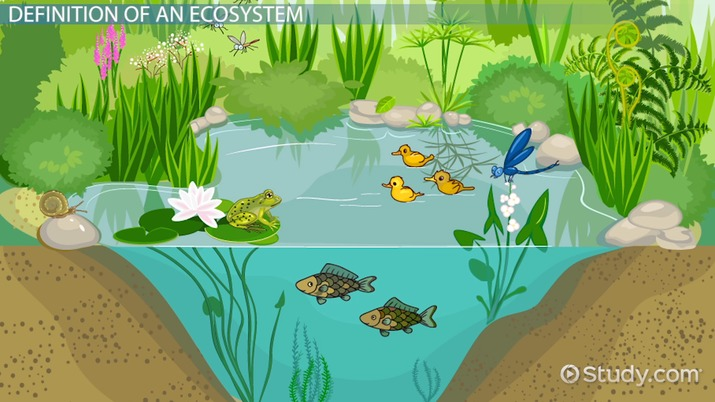 What Is An Ecosystem Definition Explanation Video Lesson