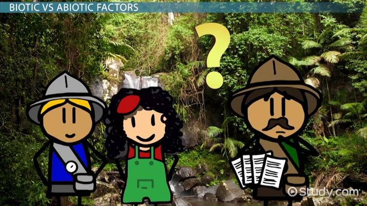 Abiotic Factors of the Tropical Rainforests - Video & Lesson