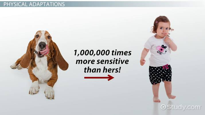 Dog Adaptations: Lesson for Kids - Video & Lesson Transcript