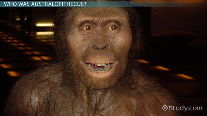 Australopithecus: Definition, Characteristics & Evolution