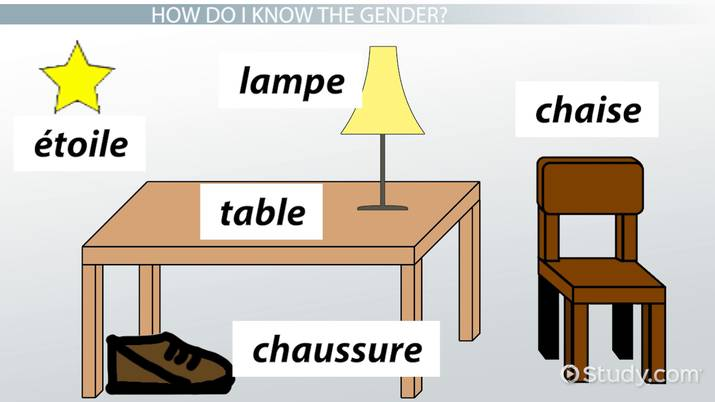 Masculine & Feminine Nouns in French - Video & Lesson