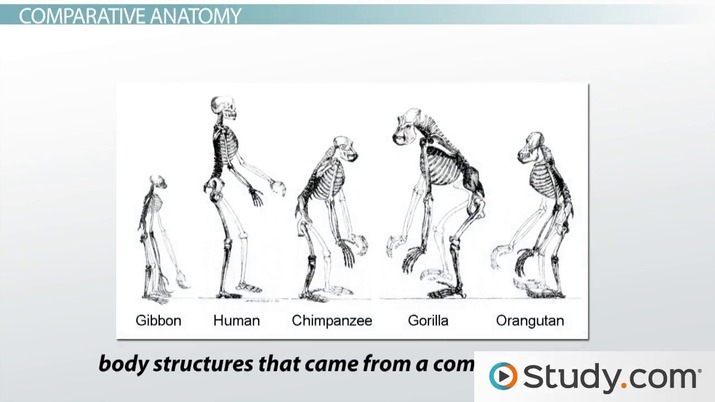 Scientific Evidence That Supports Evolution Video Lesson